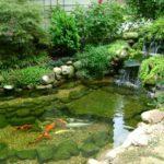 pond supplies